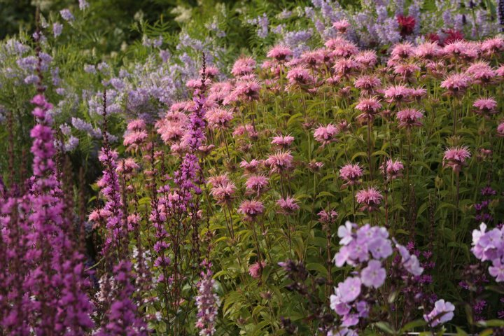 Kilmurry Nursery garden 12
