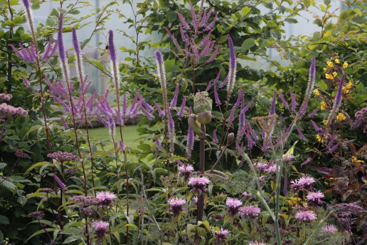 Kilmurry Nursery garden 10