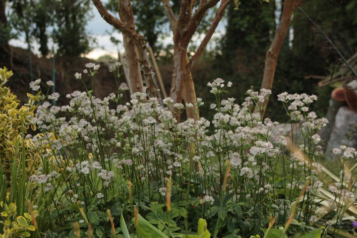 Kilmurry Nursery garden 5